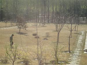水を撒く人。芝生を踏んで根の様子を見ている、と勝手に僕は想像している